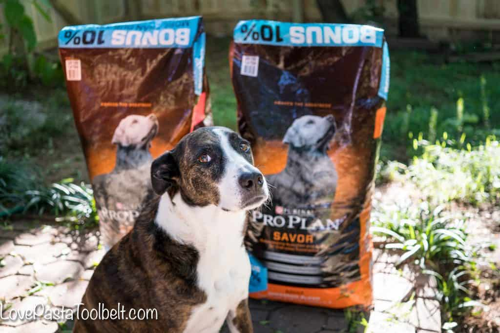 The sun is shining and the temperatures are rising and I've got 7 Summer Activities for Your Dog (and you too) #ad #PawstoSavor