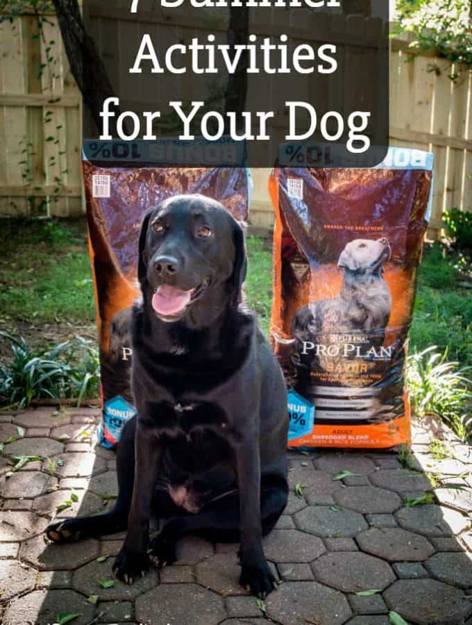 The sun is shining and the temperatures are rising and I've got 7 Summer Activities for Your Dog (and you too) #PawstoSavor #ad