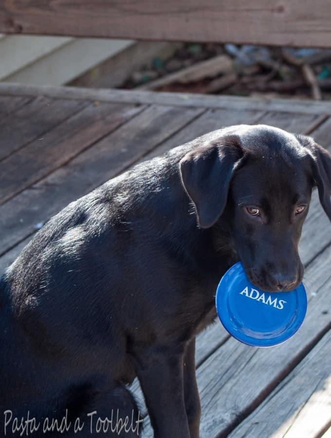 Pet Care with Adams™ Flea & Tick Control Products