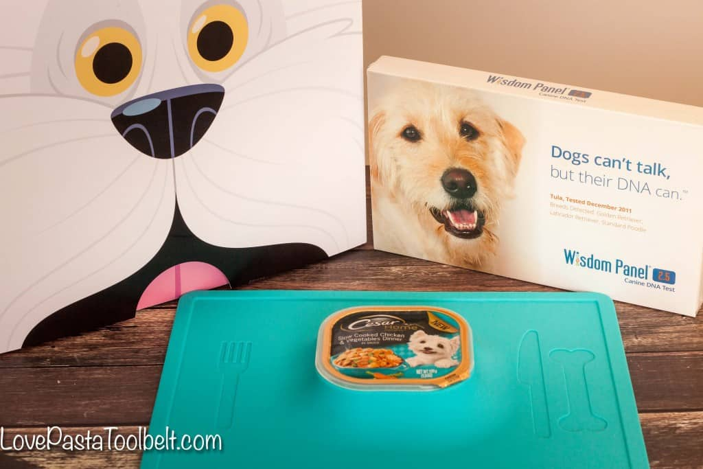 5 Tricks My Dog Taught Me- Love, Pasta and a Tool Belt | dogs | dog love | pets | pet care | #FeedtheFriendship #ad #CG