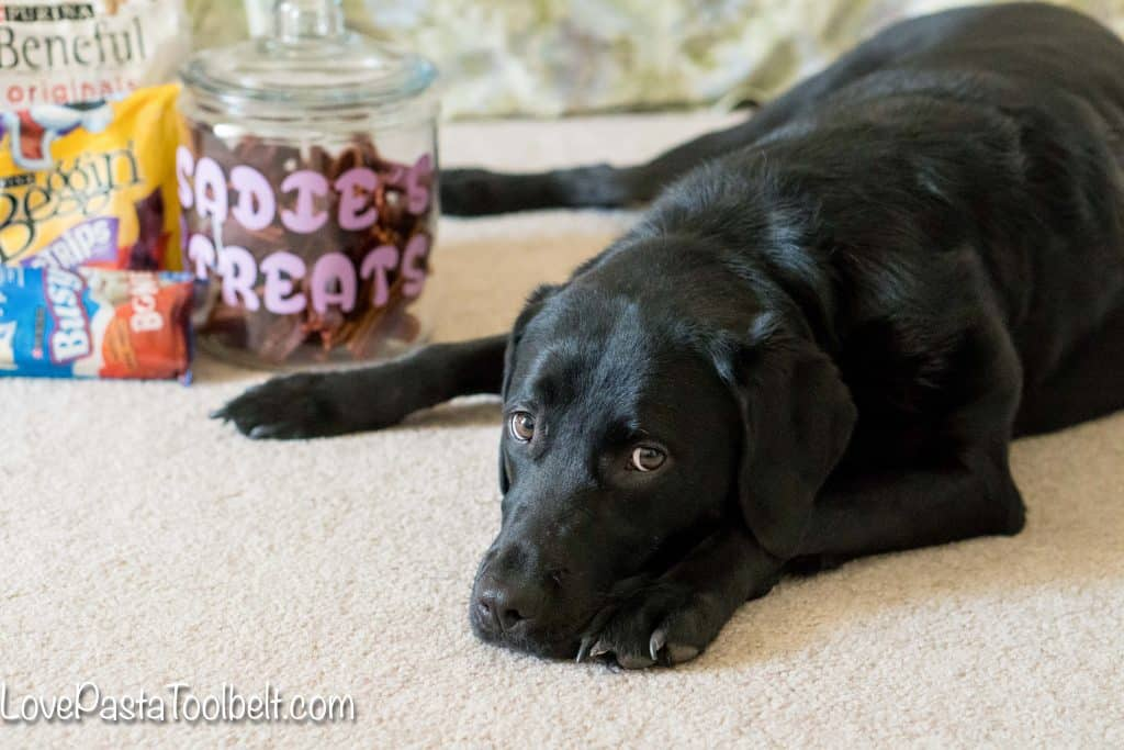 Give your pet a little extra love with this DIY Personalized Dog Treat Jar