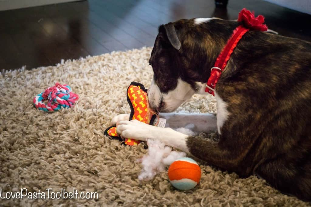 Don't forget your pup this Christmas with these Stocking Stuffer Ideas for Your Dog- Love, Pasta and a Tool Belt #ad #ClausandPaws | Dog ideas | Dog treats | Stocking Stuffers | Gift Ideas | Gifting |