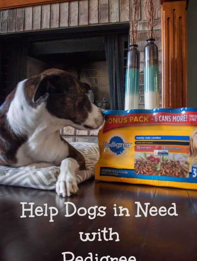 Help Dogs in Need with Pedigree- Love, Pasta and a Tool Belt #PedigreeGives #cbias #shop