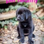 Keeping your pet healthy- Love, Pasta and a Tool Belt | pets | healthy | dogs | puppies |