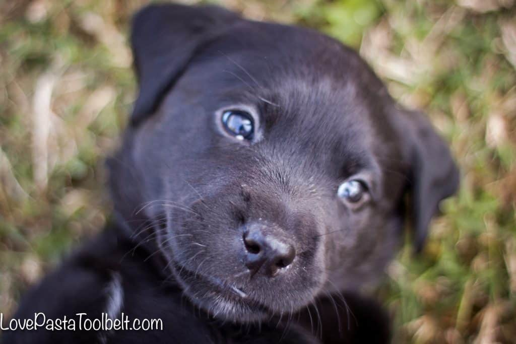 5-Tips-for-Bringing-Home-a-New-Puppy
