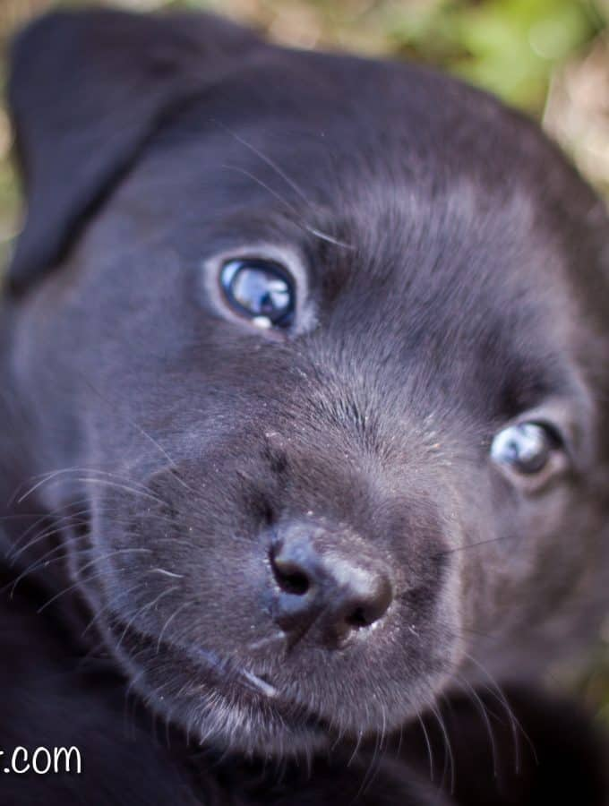 5 Tips for Bringing Home a New Puppy