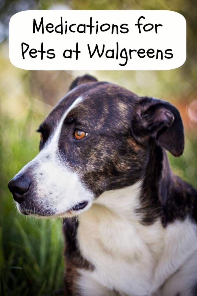 Medications for Pets at Walgreens #WalgreensRX #shop #cbias http://www.walgreens.com/topic/promotion/petrx.jsp?ext=blogcb_petrx
