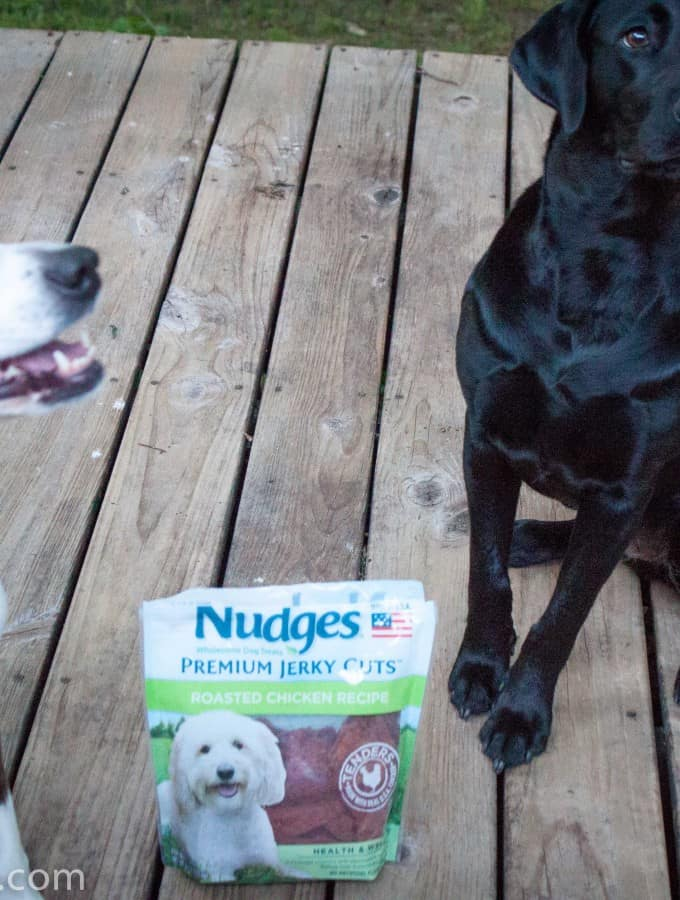 #ad Pet Safety with Nudges