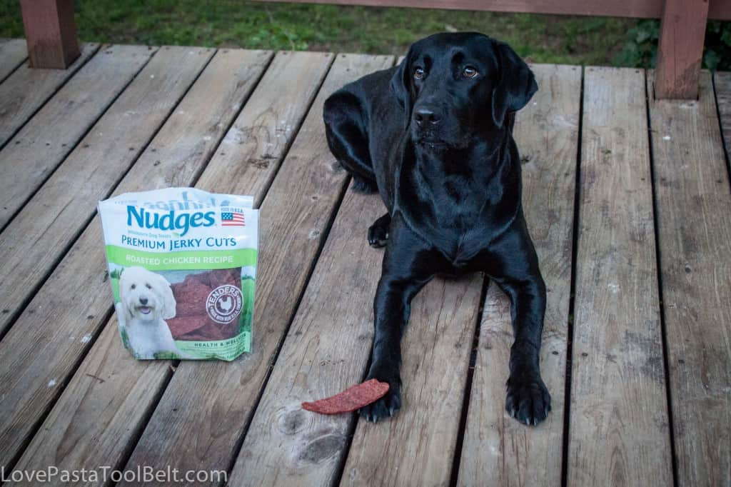 #ad Pet Safety with Nudges- Love, Pasta and a Tool Belt #shop #NudgesMoments #cbias