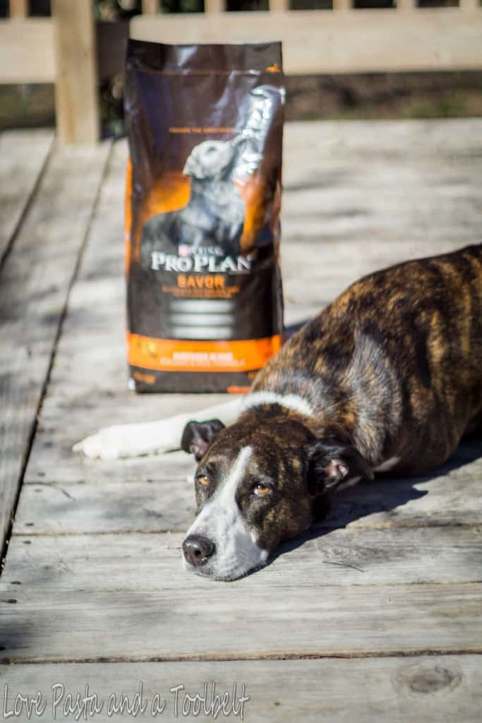 New Dog Checklist with Purina® Pro Plan®- Love, Pasta and a Tool Belt #ad #ProPlanPet   pets   dogs   free printable   printable   new dog   checklist  