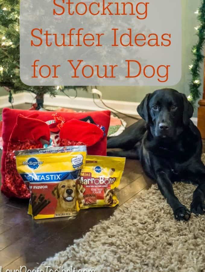 Stocking Stuffer Ideas for Your Dog