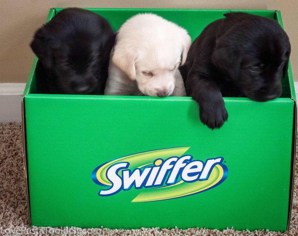 Swiffer-4